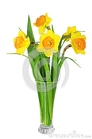 Free Beautiful Spring Flowers In Vase: Orange Narcissus (Daffodil) Stock Photo - 30242930