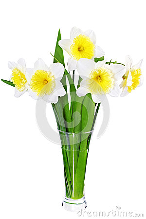 Free Beautiful Spring Flowers In Vase: Yellow-white Narcissus (Daffodil) Stock Photography - 30135132