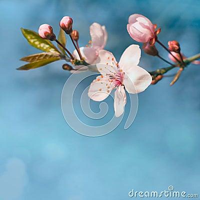 Beautiful spring flowers in sunshine.