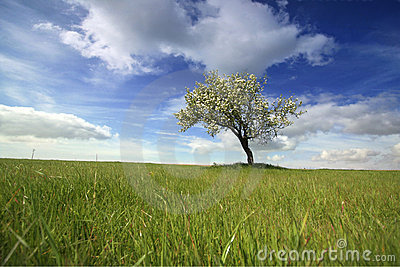Beautiful spring landscape with lonely tree