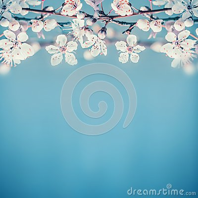 Free Beautiful Spring Nature Background With White Cherry Blossom On Turquoise Blue Stock Image - 107753661