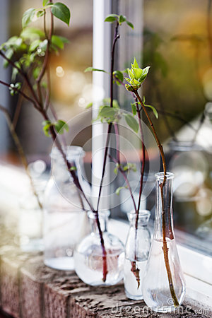 Free Beautiful Spring Tree Branches In Glass Bottles On Window Royalty Free Stock Images - 57677159