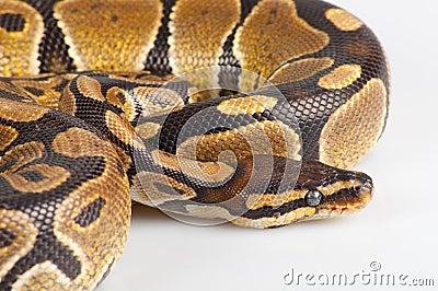 Beautiful strong python