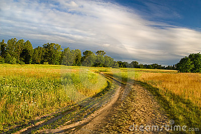 Beautiful summer meadow and earth road