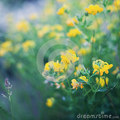 Free Beautiful Summer Meadow With Plant, Grass And Flowers, Natural Background, Vintage Toning Royalty Free Stock Photo - 55378855