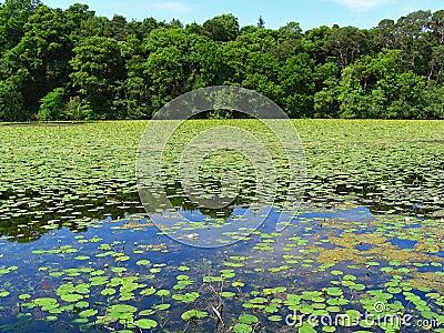Beautiful summer pond