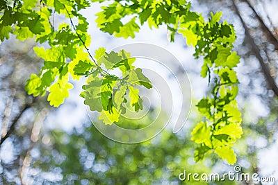 Beautiful summer tree