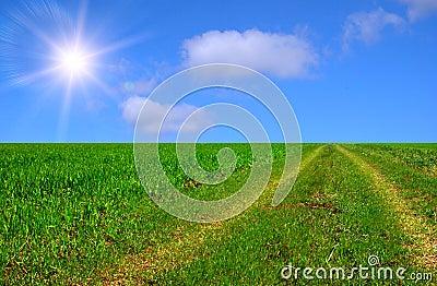 Beautiful sunny road