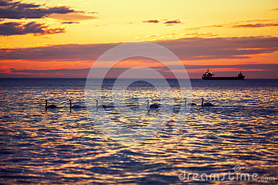 Beautiful sunrise over the horizon, dramatic clouds and swans