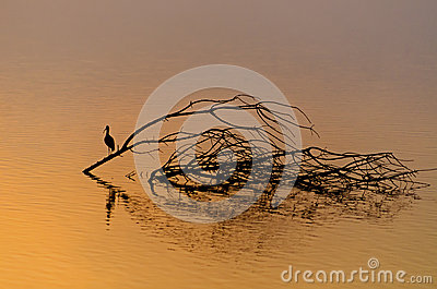 Beautiful sunrise and reflection of a bird in hagamon lake