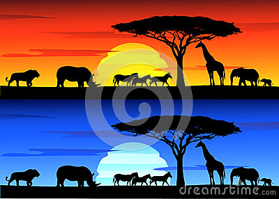 Wildlife Stock Photography on Africa wildlife
