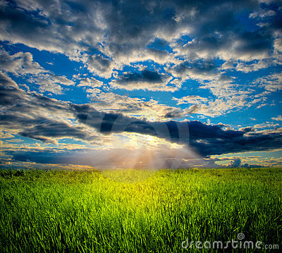 Beautiful sunset in meadow