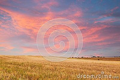 Beautiful sunset over golden field