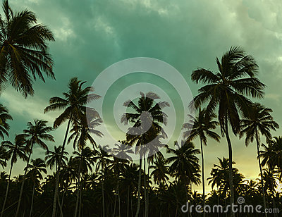 Beautiful sunset, palm trees and azure blue green