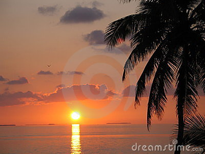 Beautiful Sunset with Palms