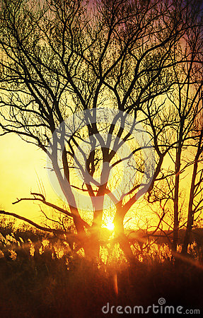 Free Beautiful Sunset, Trees In Meadow, Landscape Against Sun Stock Photo - 39572140