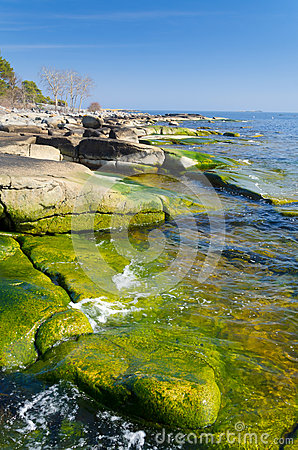 Beautiful Swedish green coast