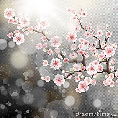 Free Beautiful Template Sakura Flowers. EPS 10 Stock Images - 71350074
