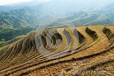 Beautiful terraced fields scenery