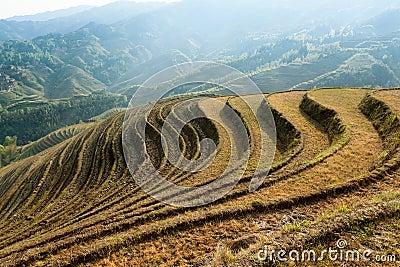 Beautiful terraced fields scenery