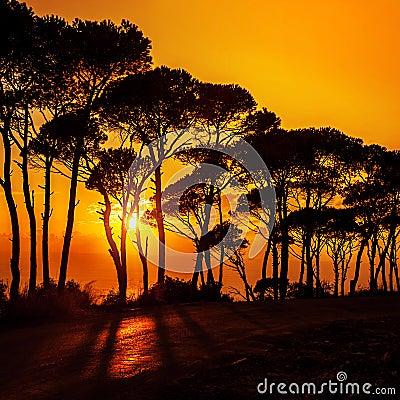 Beautiful trees on sunset