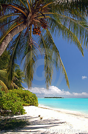 Free Beautiful Tropical Beach Royalty Free Stock Images - 2901639