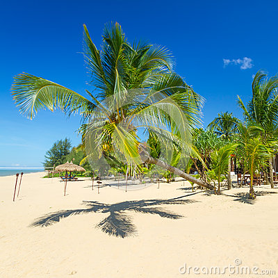 Beautiful tropical beach with coconut palm tree