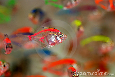 beautiful tropical fish