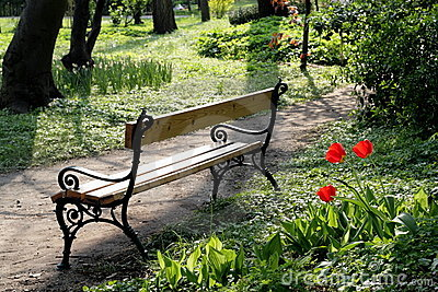 Beautiful tulips and a bench