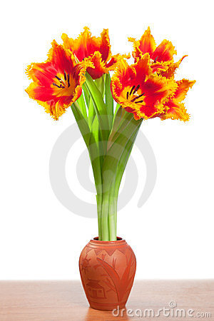 Beautiful tulips in a clay pot.