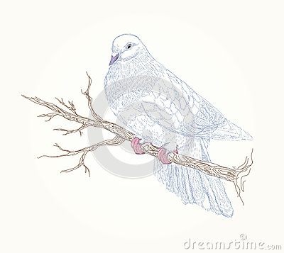 Beautiful vector bird on flowering branch
