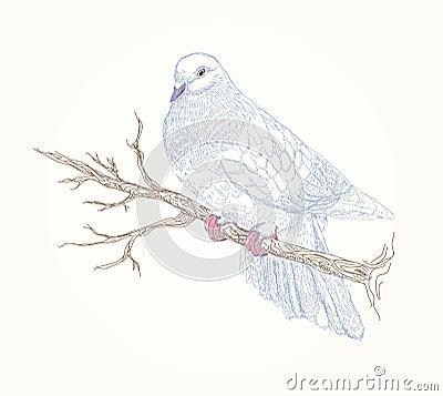 Beautiful vector bird on flowering branch
