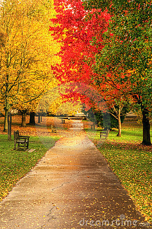 Free Beautiful Vibrant Autumn Fall Forest Scene Stock Images - 19523894