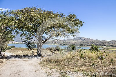 Beautiful view of a dirt road leading to a lake with a tree Stock Photo
