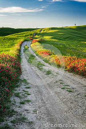 Beautiful view of the tortuous path at sunset in Tuscany