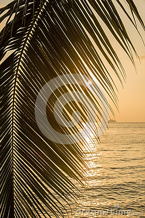 Beautiful view of a tropical beach with palm leaf