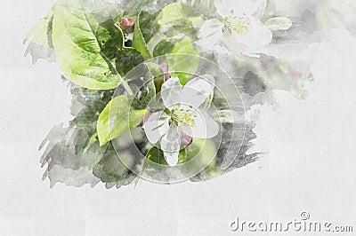 Beautiful watercolor flower. Illustration Spring. Cartoon Illustration