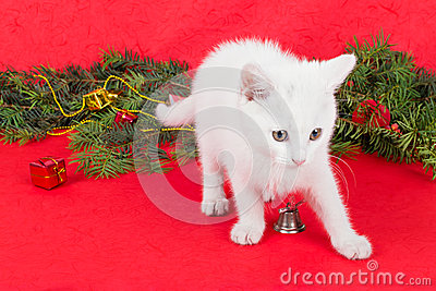Beautiful white little cat next to Christmas decoration