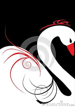 Beautiful white swan