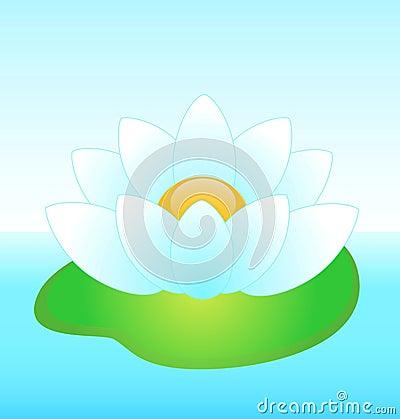 Beautiful white water-lily