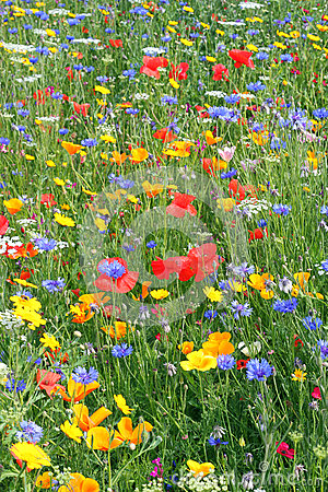 Beautiful wild flowers.