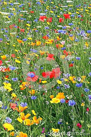 Beautiful wild flowers.