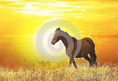 Beautiful wild horse at sunset