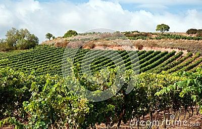 Beautiful winery in Spain
