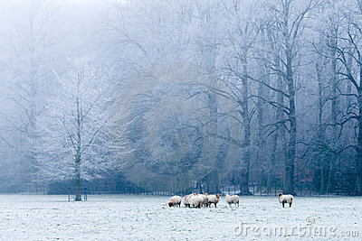 Beautiful winter landscape scene