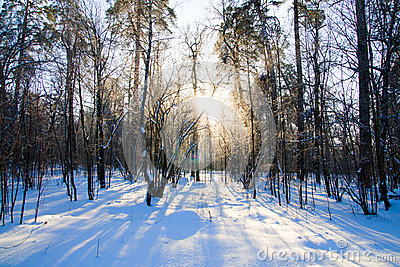 Beautiful Winter Sunset With Trees In Snow Stock Photos - Image: 26300443