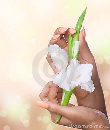 Beautiful woman hands with white flowers