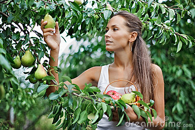 Beautiful woman picking the pear