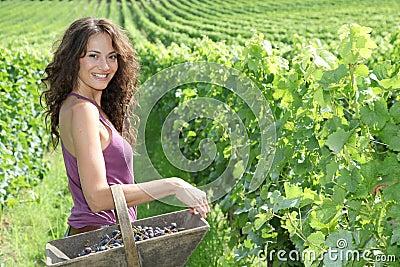 Beautiful woman in wine rows