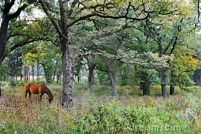 Beautiful Woods and Horse